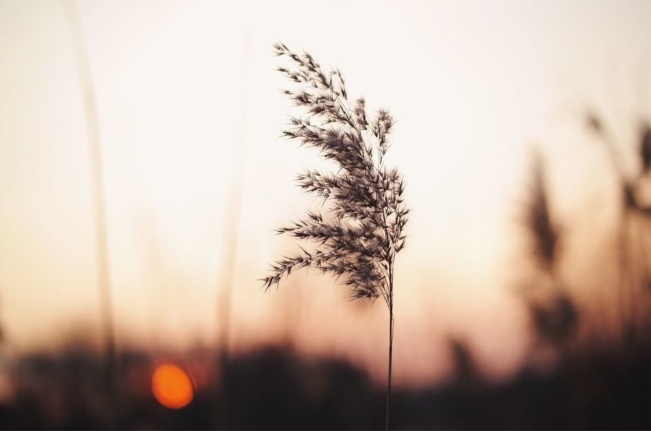 Gentle breeze... Nature Growth Plant Fragility Silhouette Close-up Tranquility Beauty In Nature Outdoors Dandelion Seed Day Natural Light Sunset Warm Light Fresh On Eyeem  Made In Romania My Favorite Photo Found On The Roll Details Of My Life Vscocam Botany Flower Nature Collection Landscape Focus On Foreground Art Is Everywhere
