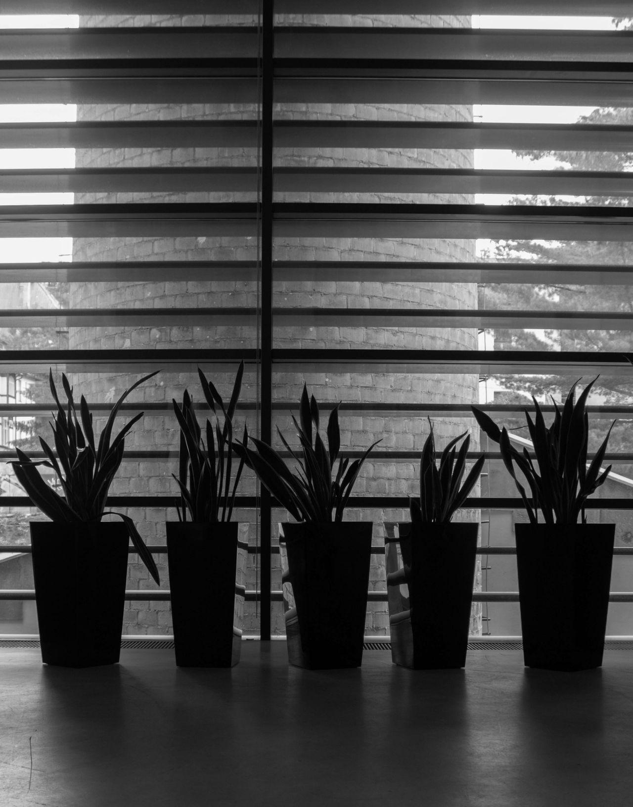 Indoors  No People Illuminated Architecture Day Minimalism Minimal Minimalobsession Minimalistic Minimalmood Minimalist Photography  Blackandwhite Black And White Black & White Blackandwhite Photography Black And White Photography Black&white Black And White Collection  Plants Plant Plant Life Blackandwhitephoto