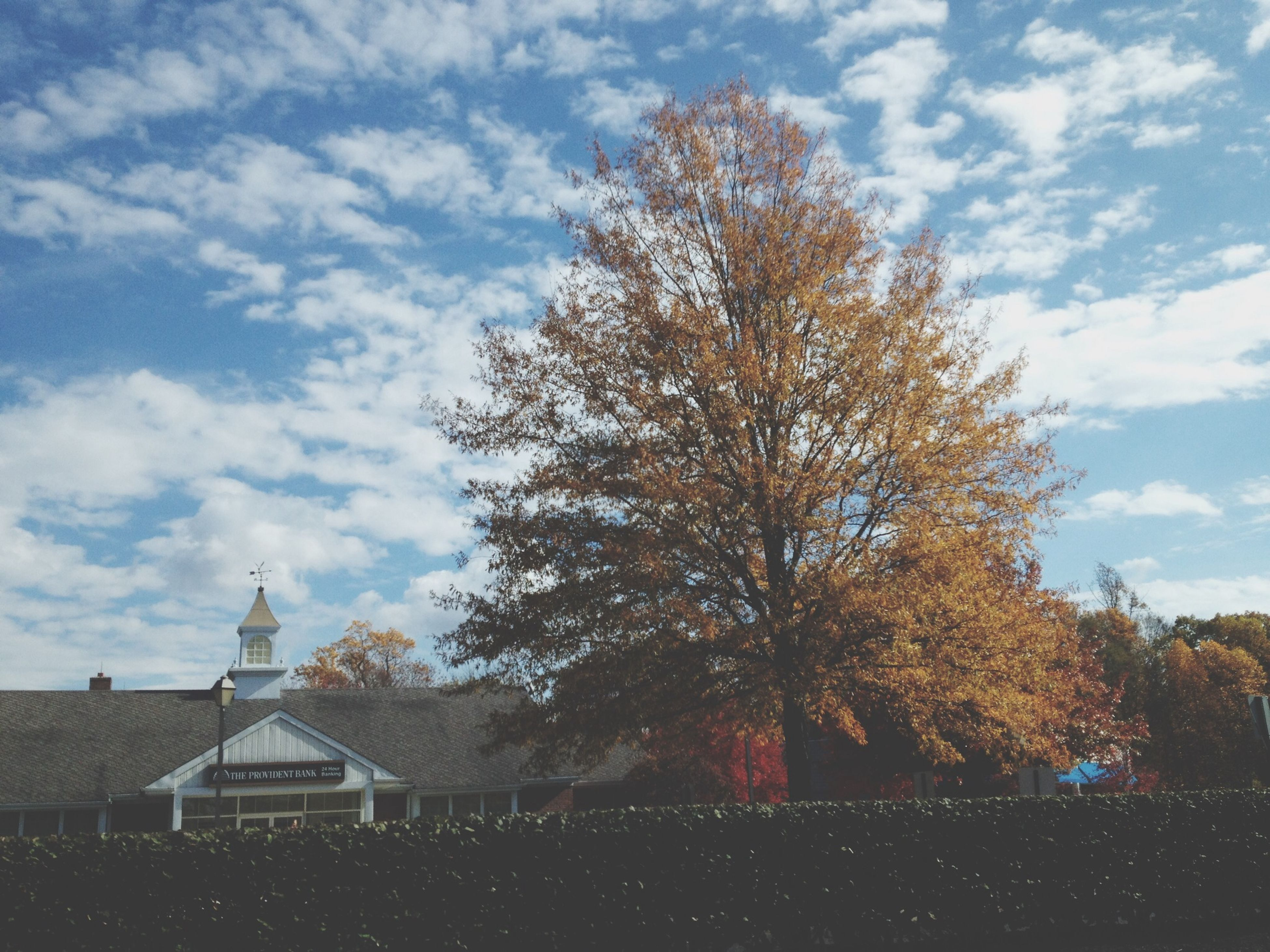 tree, sky, building exterior, architecture, built structure, cloud - sky, cloud, cloudy, house, low angle view, place of worship, religion, roof, nature, church, growth, spirituality, day, branch
