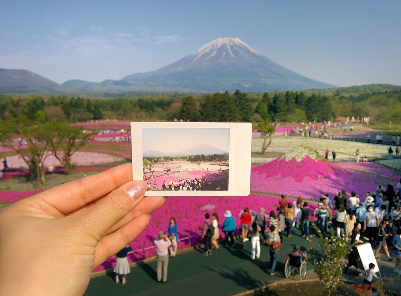 Mountain People EyeEmNewHere Travel Photography Street Photography EyeEm Gallery Japan Travel 富士山 Mt Fuji Spring Cheki Cherry Blossoms