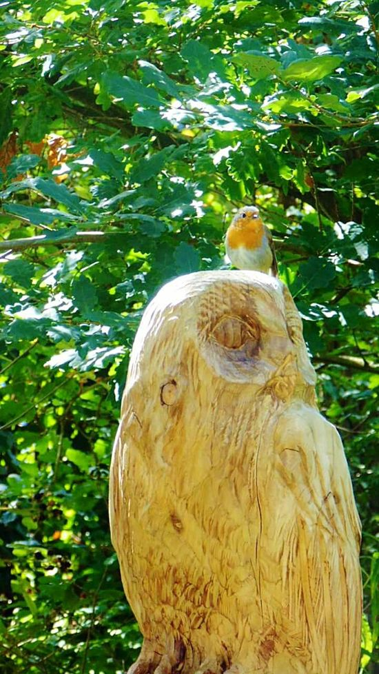 Animal Themes Tree Nature One Animal Day Beauty In Nature Eyemphotography EyeEm Best Shots - Nature Robin Redbreast Wooden Owl Sitting Bird