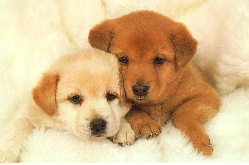 Comfortable Curiosity Dog Home Relaxation Relaxing Worlds Cutest Dogs