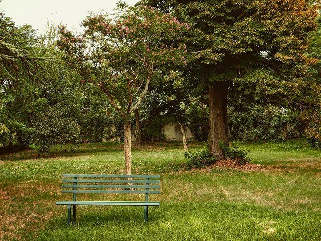 Landscape Park Nature Green Color FolowMe ✌ Follow Follow4follow Photography Photooftheday