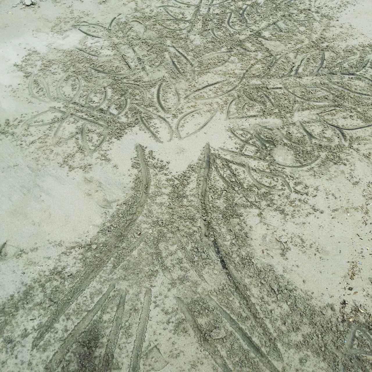 High Angle View Of Tree Drawing On Sand At Beach
