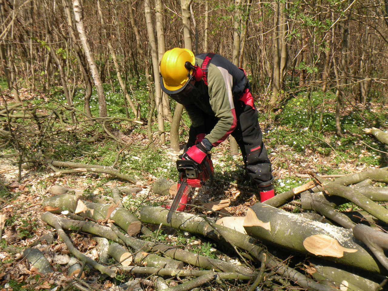 Man cutting firewood with a chainsaw in Sønderskov Forest on the island of Zealand in Denmark - Tranquility Nature Beauty In Nature Outdoors Scenics Tranquil Scene Outline Man Chainsaw Firewood Forest TakeoverContrast in Sønderskov Forest on the island of Zealand in Denmark
