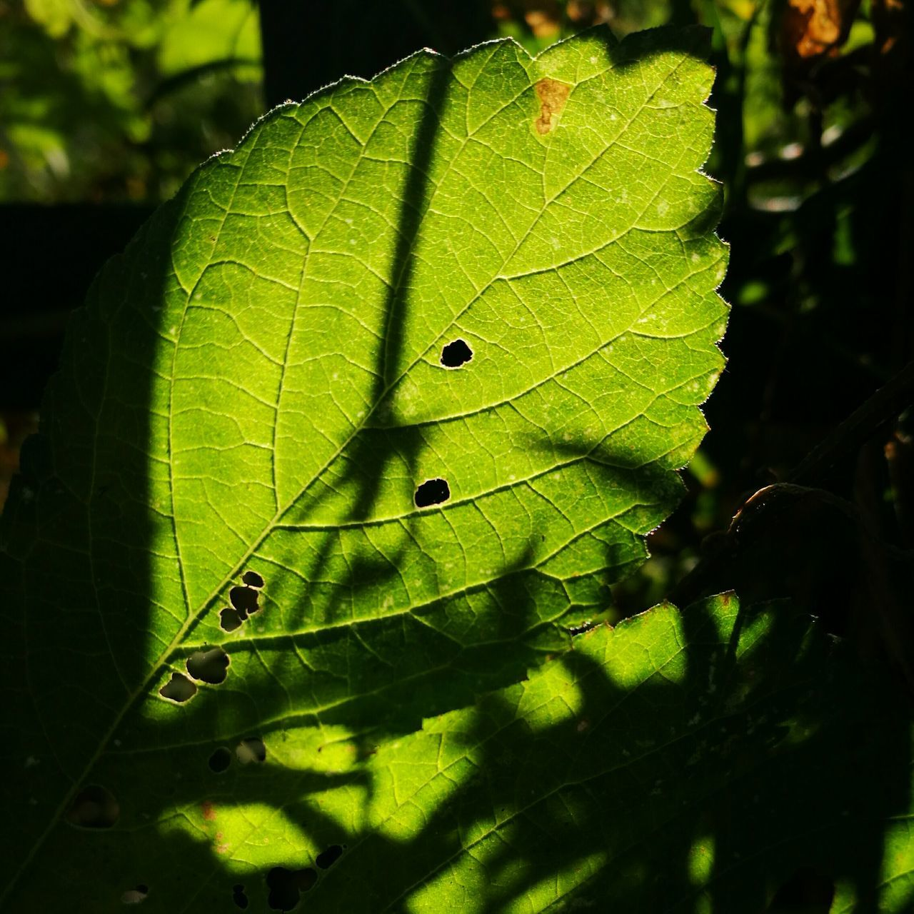 leaf, green color, close-up, nature, no people, growth, day, outdoors, plant, beauty in nature, fragility, animal themes, freshness