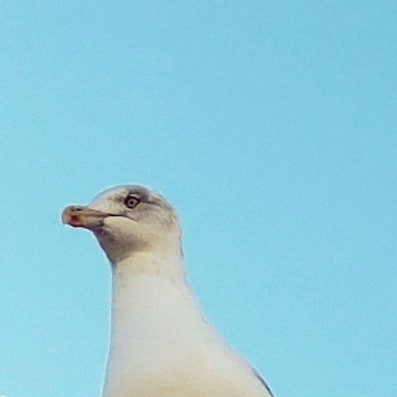 Bird No People Outdoors Sky Day Seagull Clear Sky Close-up Animal Wildlife Animals In The Wild Animal Themes Blue One Animal Nature