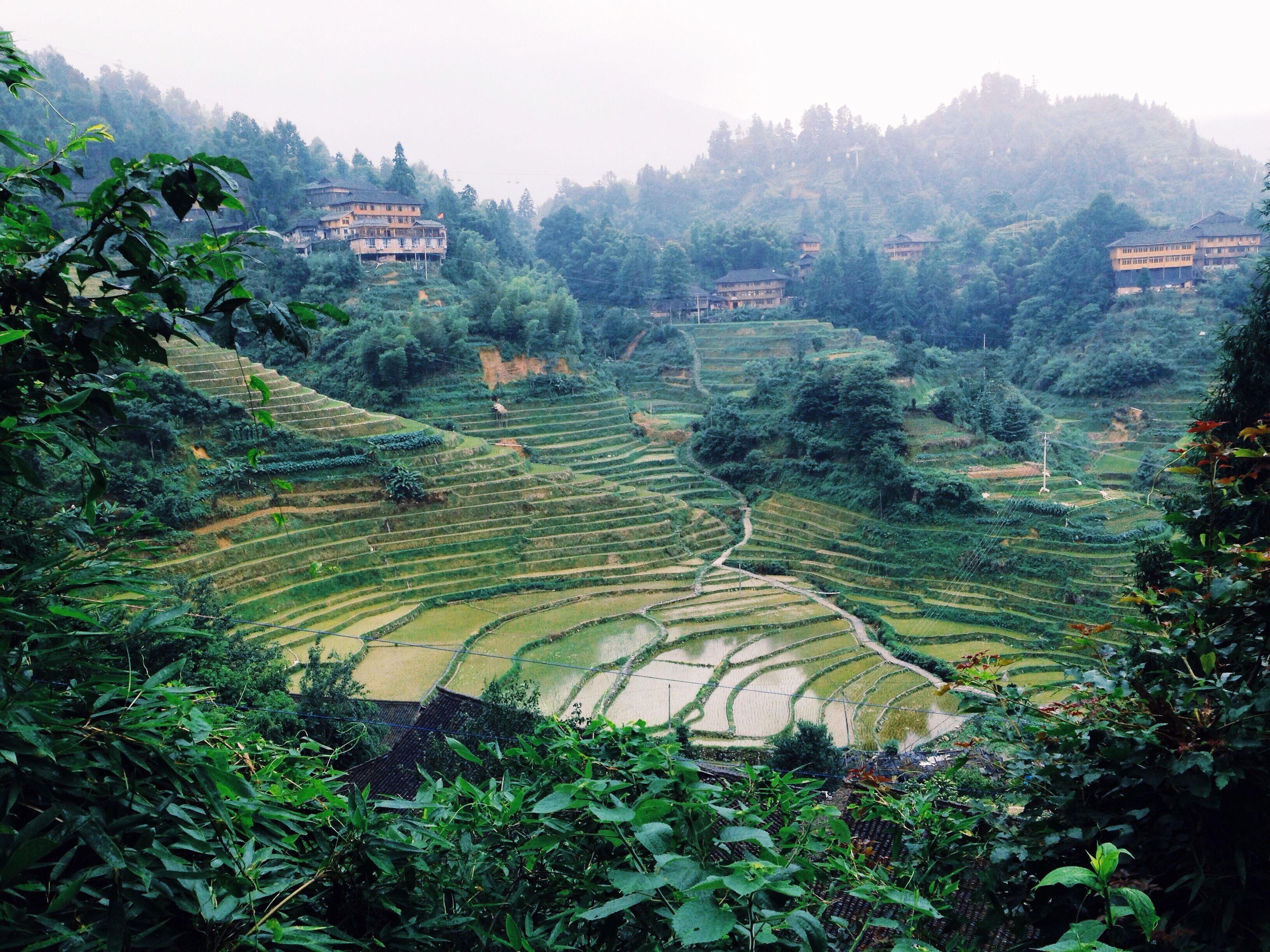 Rice terraces of Dazhai Village IPhoneography Dazhai Longsheng Guangxi China Traveling Red Yao Rice Field