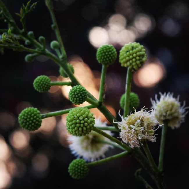When Science meets nature. A DNA like structure 😛🌿💡 Bokeh Ig_nature Tagsta_nature Tagstagramers Vsconature Ig_captures Vsco_hub Nikond5300 Nikoninsta Instanature Instasky Ig_great_pics Green Scientific Naturephotography Instamoment Minimal Delightfullyordinary Spring Macro Flower Aroundtheworld Light Bokehlicious Naturel naturelovers naturefreaks natureseekers