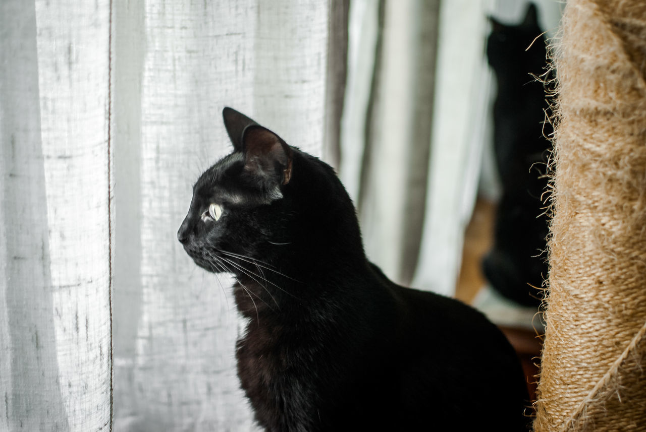 Animal Themes BLackCat Cat Domestic Animals Domestic Cat Feline Indoors  No People One Animal Pets