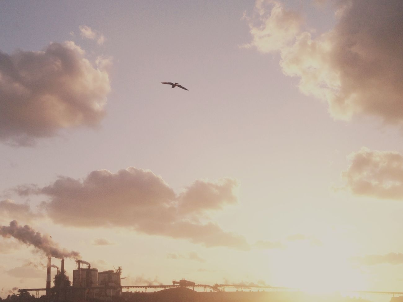 IPhone IPhoneography Mobilephotography Flying Sky Bird Evning Sky Sanset Collection EvningGlow Sanset Sunset
