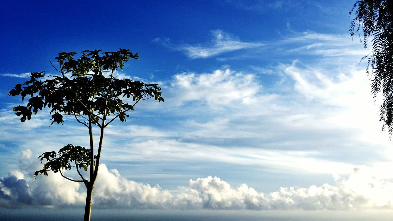 sky, tree, nature, cloud - sky, beauty in nature, low angle view, day, tranquility, outdoors, growth, branch, scenics, tranquil scene, no people, leaf, blue