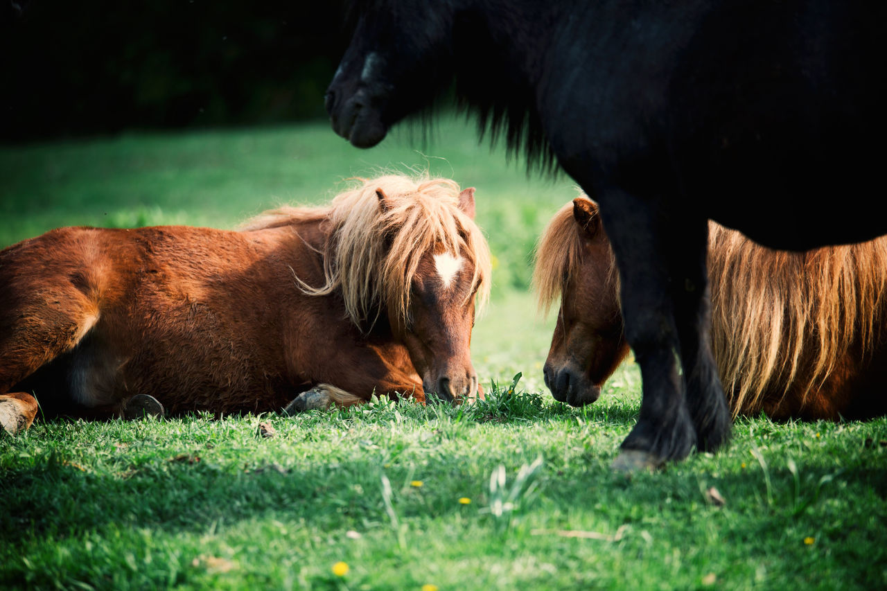 Animal Themes Cow Day Domestic Animals Field Grass Grazing Green Color Growth Hairstyle Horse Livestock Mammal Nature Nature Nature Photography Nature_collection Naturelovers No People Outdoor Photography Outdoors Pony