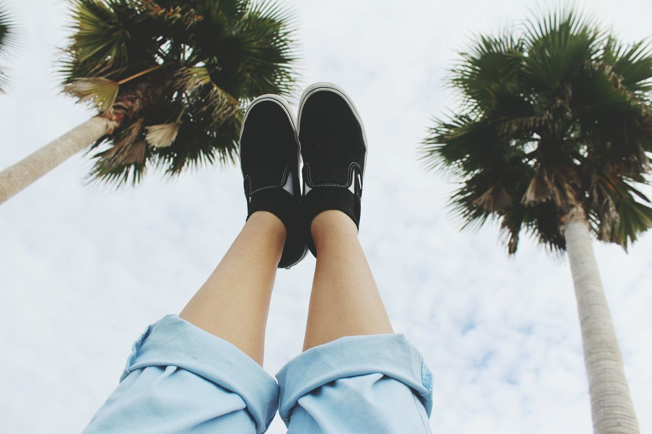 Beautiful stock photos of palm tree,  Blue,  Canvas Shoe,  Cloud,  Day