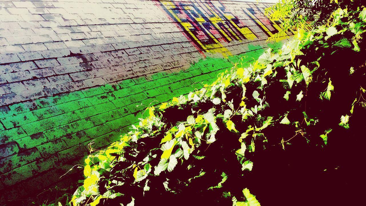 Graffitiporn Street Art Taking Photos Syracuse Ny Leaves&Vines Hidden Beauty
