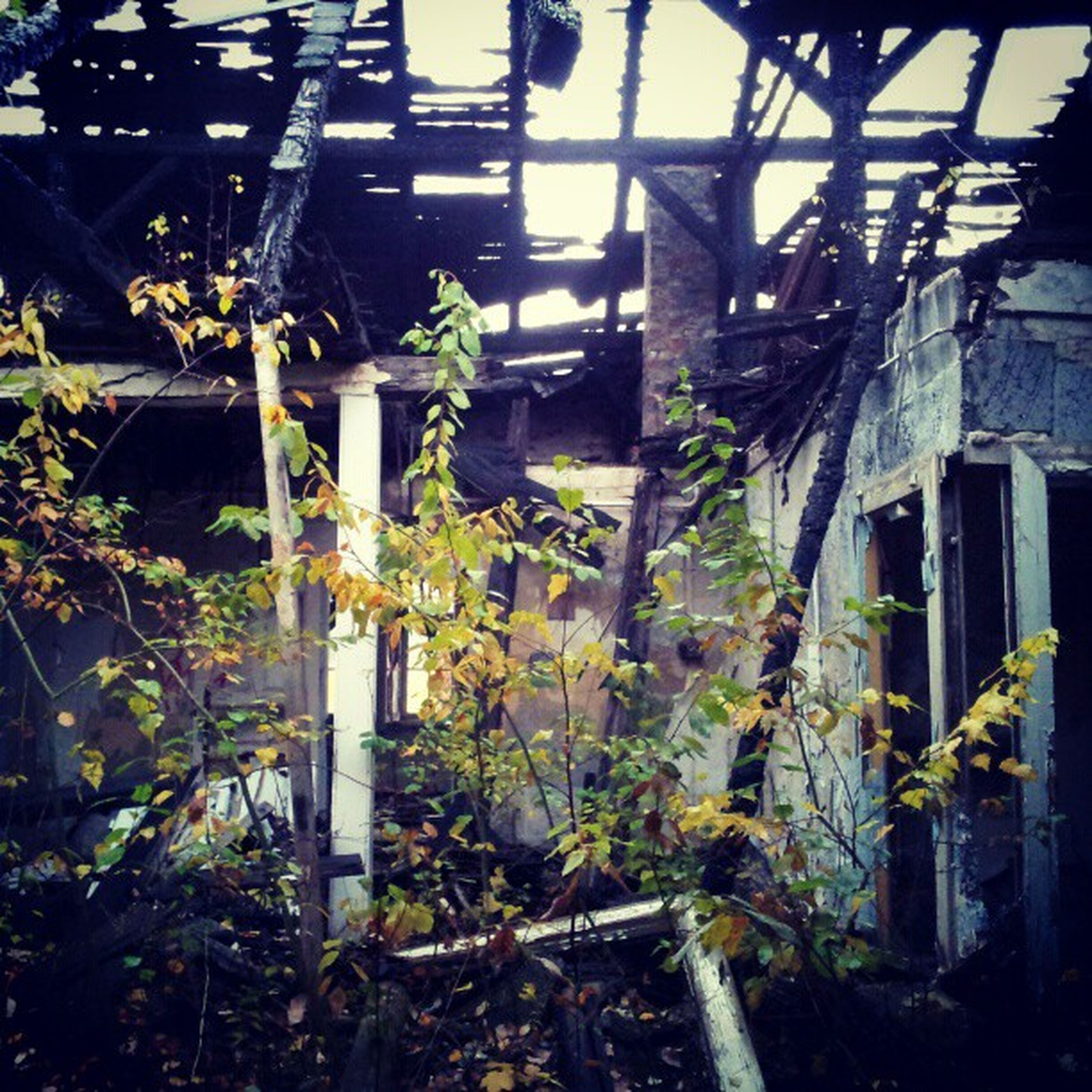 architecture, built structure, building exterior, plant, abandoned, growth, house, potted plant, damaged, day, window, obsolete, indoors, leaf, no people, old, tree, building, wall - building feature, residential structure