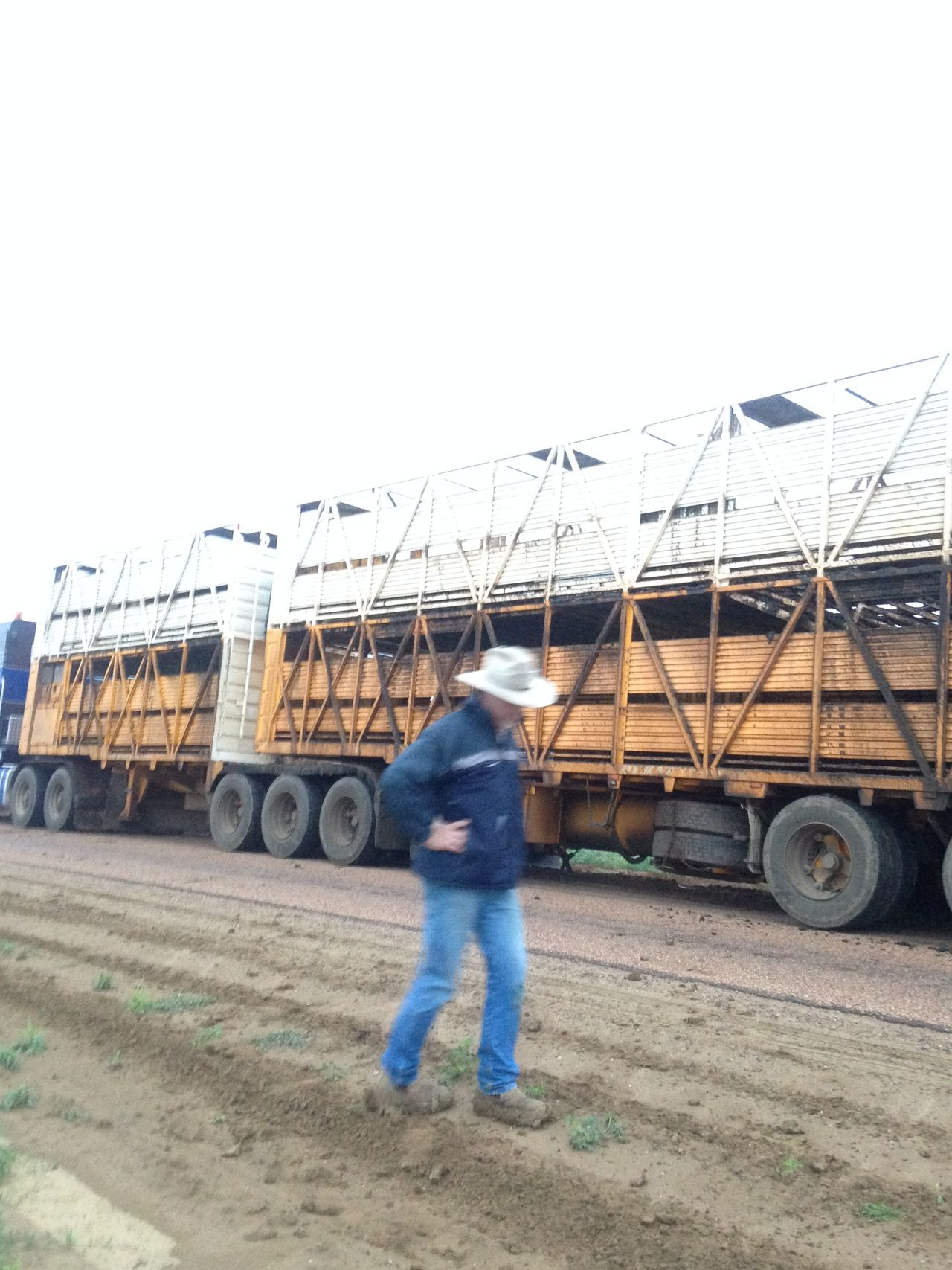 Casual Clothing Cattle Cattle Farm Clear Sky Contemplation Cowboy Cowboy Hat Eighteen Wheeler Full Length Land Vehicle Men Mode Of Transport Outdoors Prime Mover Road Semitrailer Side View Street Tranquility Transportation Truck Trucking Australia Truckinglife Unloading Station Walking