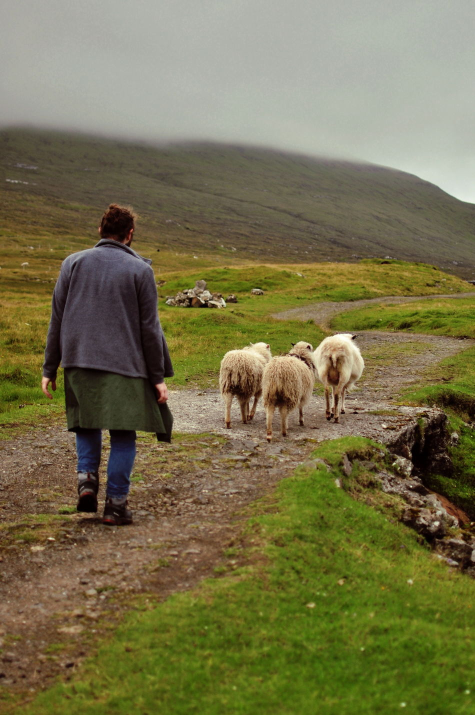 Faroe Islands Grass Hill Lifestyles Livestock Men Mountain Person Pet Owner Pets Sheep The Way Forward Togetherness Walking