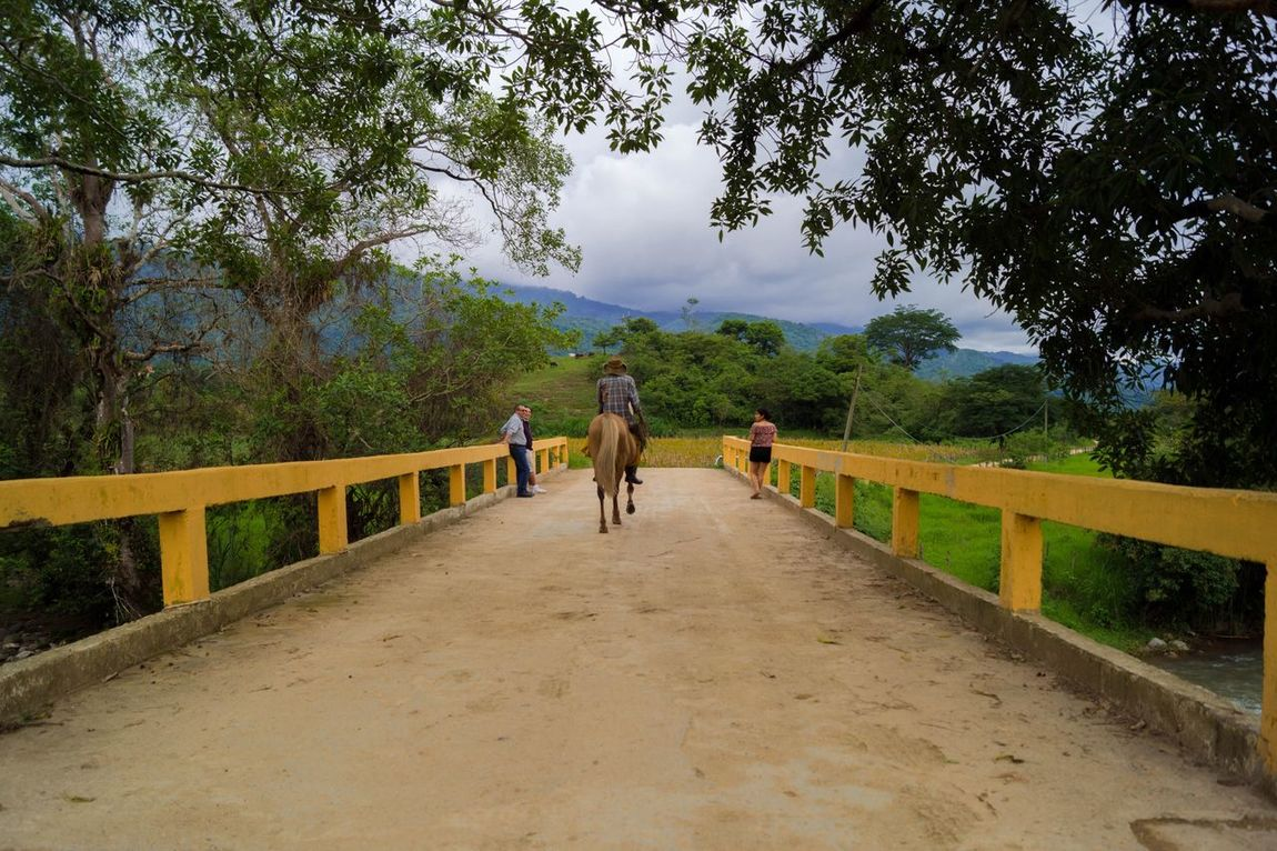 Railing Walking Tree Bridge - Man Made Structure Rear View Nature Full Length The Way Forward One Animal (null)Real People Two People Footbridge Domestic Animals Dog Outdoors Women Pets Day Beauty In Nature Adult