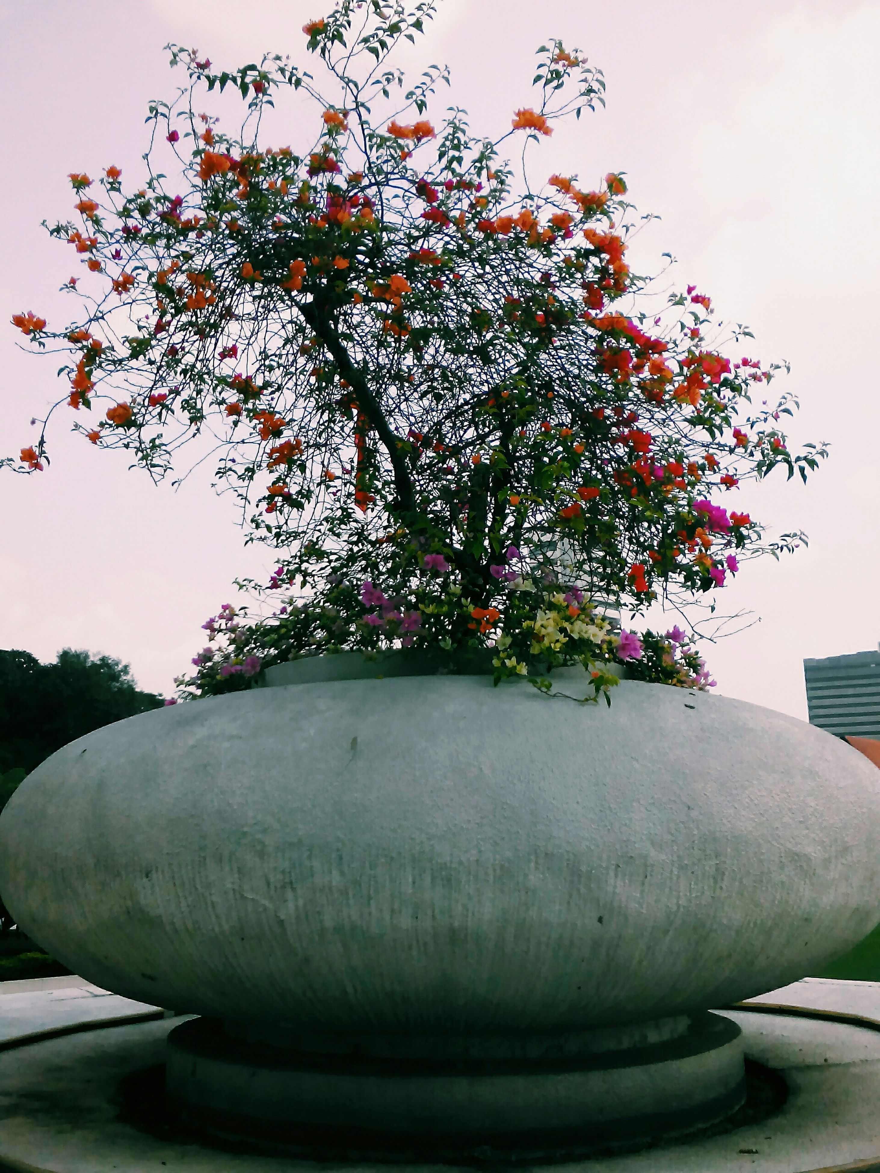 tree, growth, plant, flower, potted plant, built structure, nature, architecture, leaf, park - man made space, day, sculpture, building exterior, statue, no people, wall - building feature, outdoors, formal garden, clear sky, art and craft