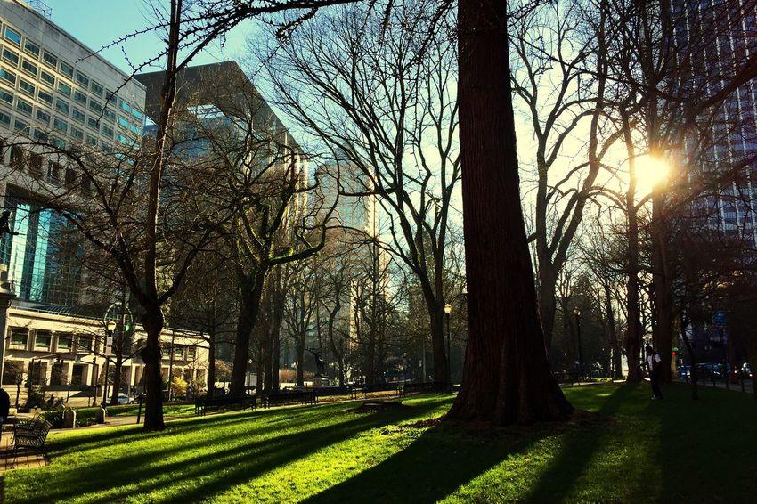 Good Morning Enjoying The Sun Hugging A Tree City Light Beautiful Downtown Urban Landscape Streetphotography Nature
