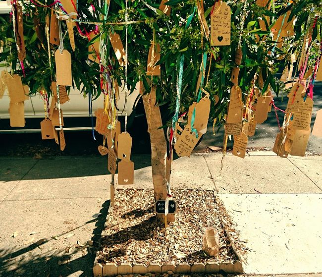 Sunlight Tree Trunk Plant Outdoors Growth Inspirational Wish Tree Tree Wishes Wishing Wishful Wishful Thinking San Francisco California
