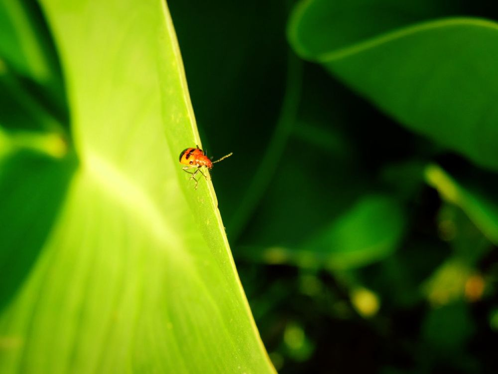 Insect Leaf Nature Green Color Plant Bug On Leaf