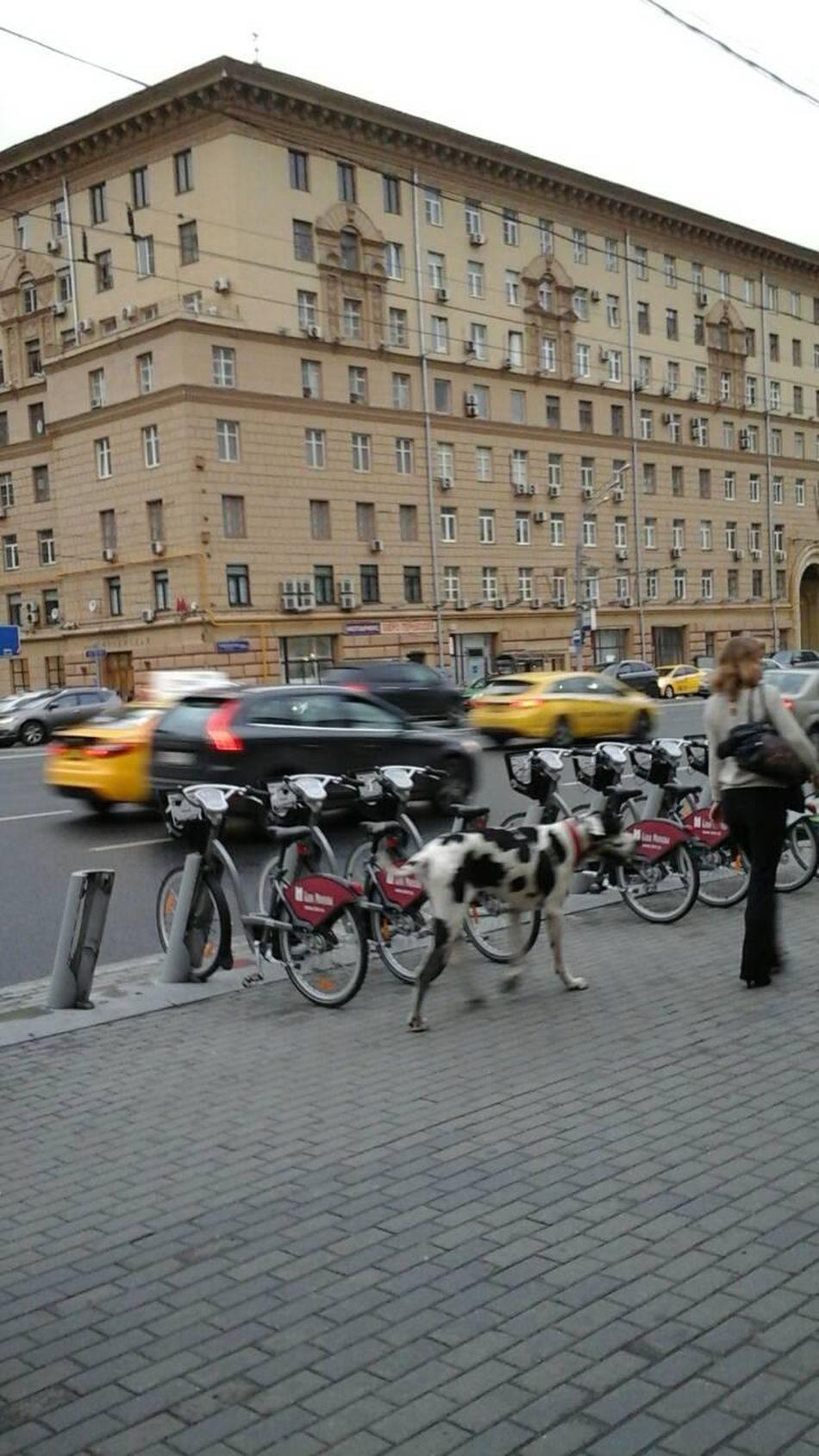 Blurs Summer Moscow Eyeemphotography Street Photography The Street Photographer - 2016 EyeEm Awards The Photojournalist - 2016 EyeEm Awards