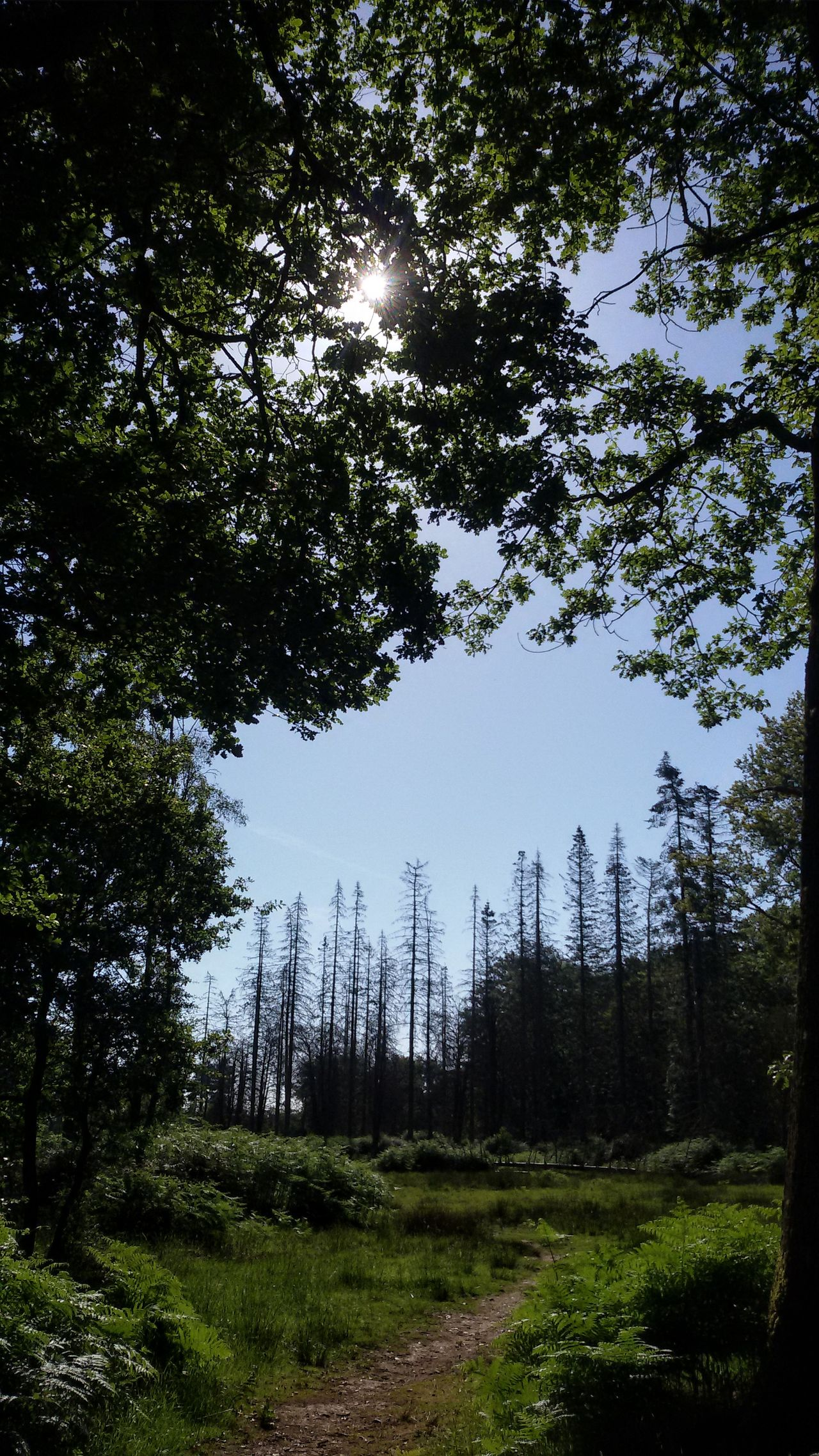 The amazing forest. Trees And Sky Tree Forest Nature Beauty In Nature Tranquil Scene Outdoors Day Leaves Environment Sun New Forest National Park Rhinfield Uk South