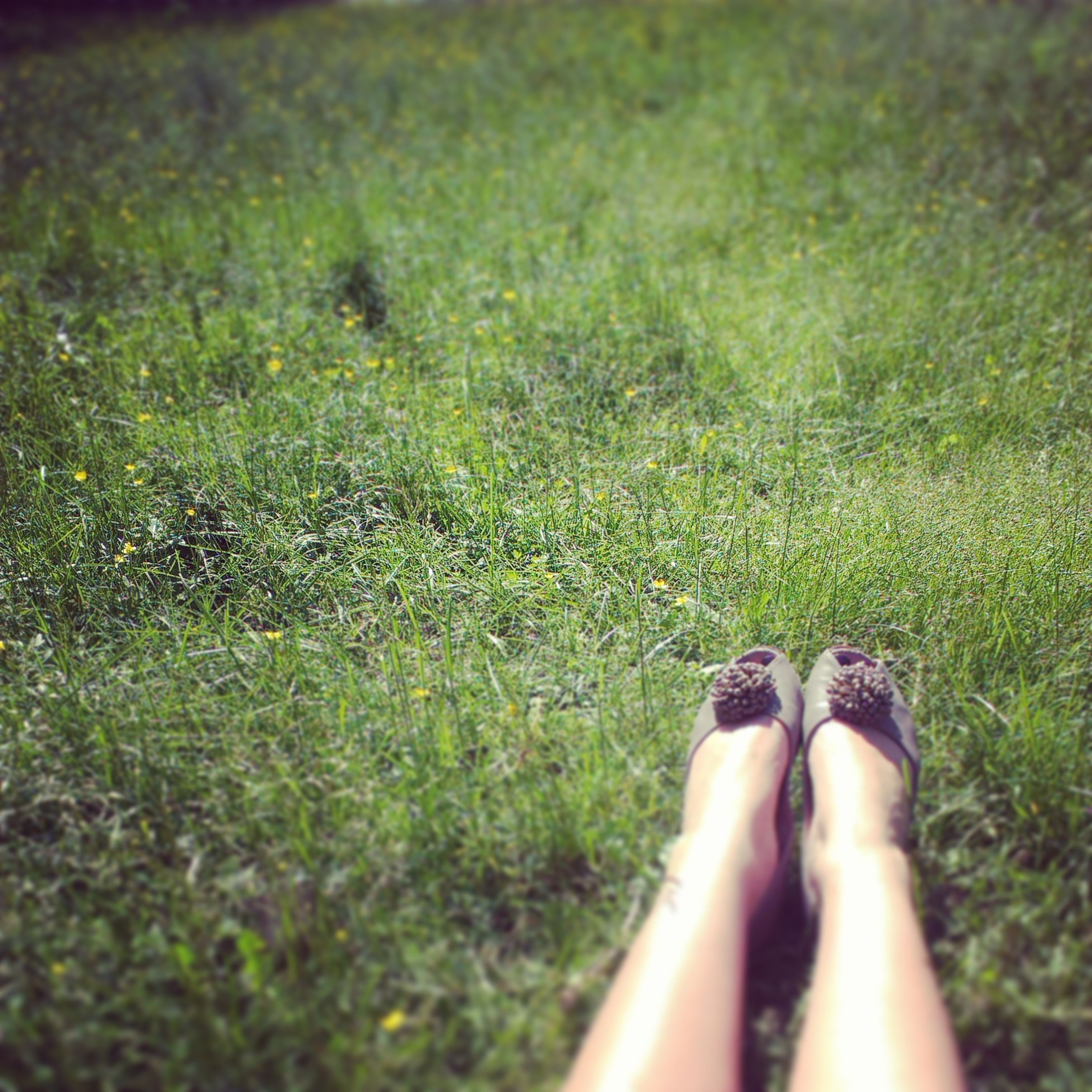 low section, person, personal perspective, grass, shoe, human foot, lifestyles, grassy, field, leisure activity, footwear, standing, part of, unrecognizable person, men, green color