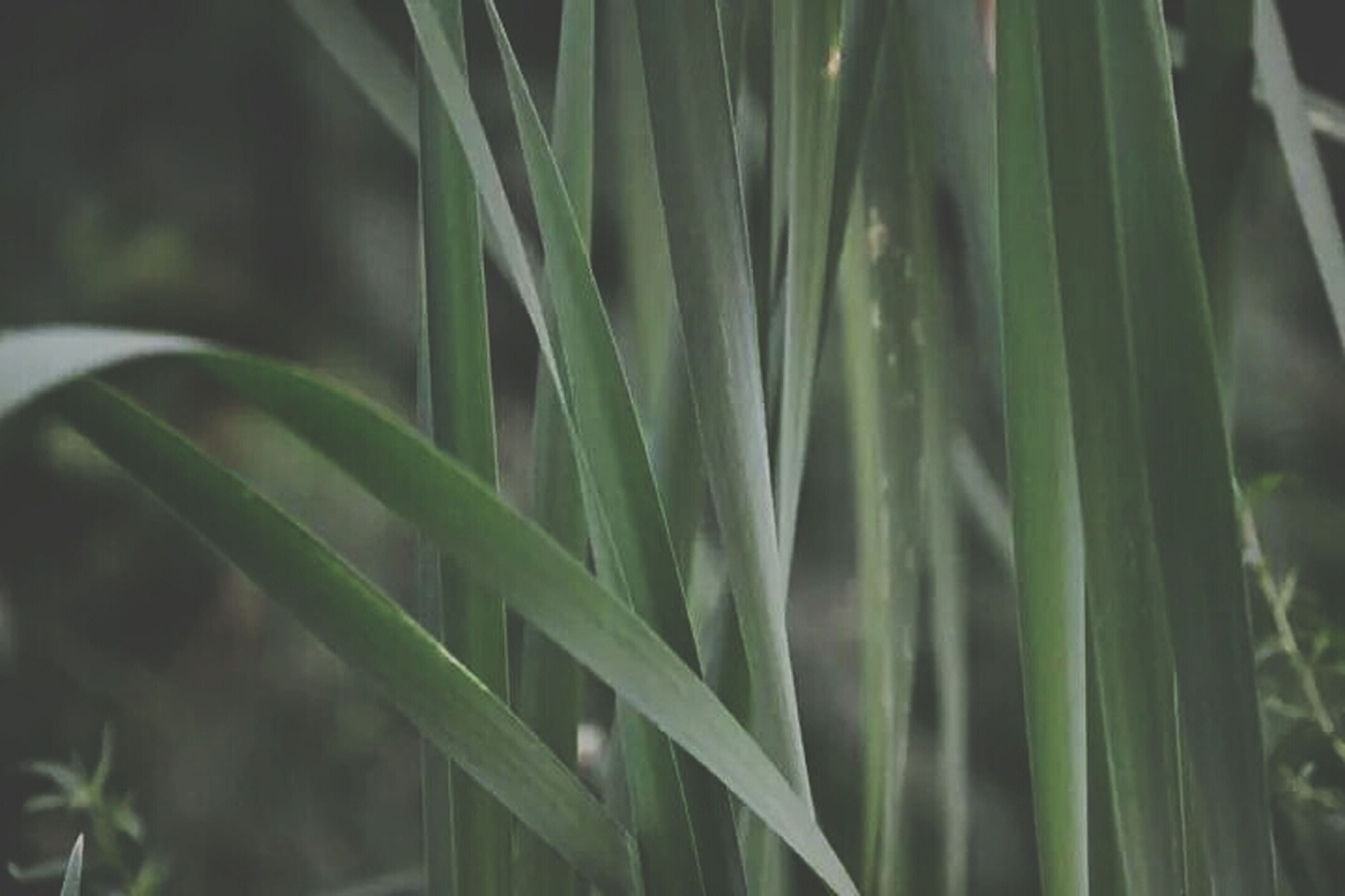 growth, plant, close-up, nature, grass, green color, leaf, blade of grass, selective focus, beauty in nature, freshness, focus on foreground, drop, growing, outdoors, field, wet, water, no people, day