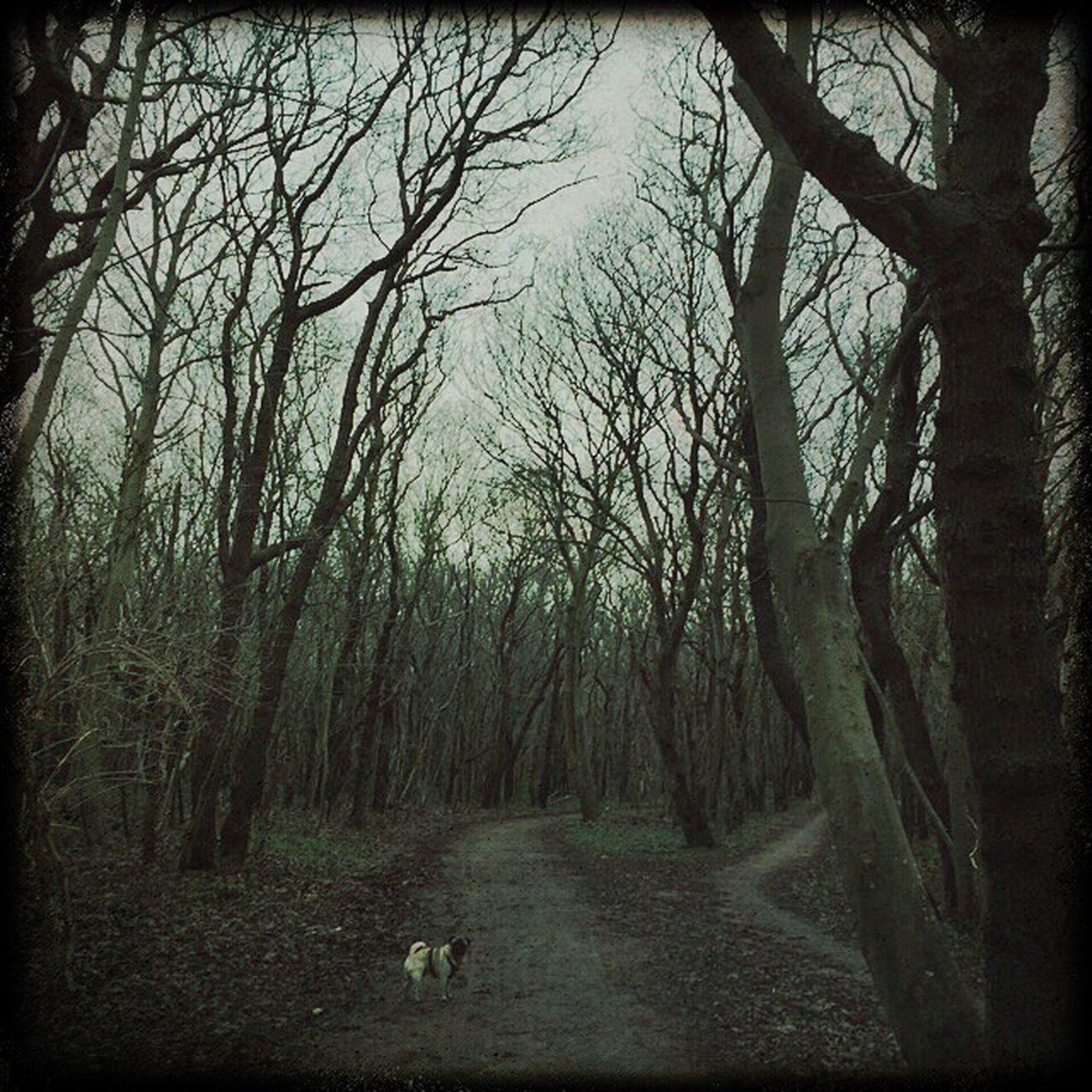 Raimondo in the mystic forest Forest Dark Nature Textures EyeEm Best Shots EyeEm Best Edits