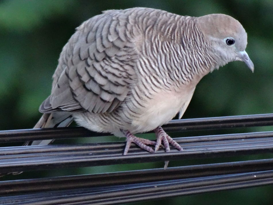 Animal Themes Animal Wildlife Animals In The Wild Bird Close-up Day No People One Animal Outdoors Perching นก