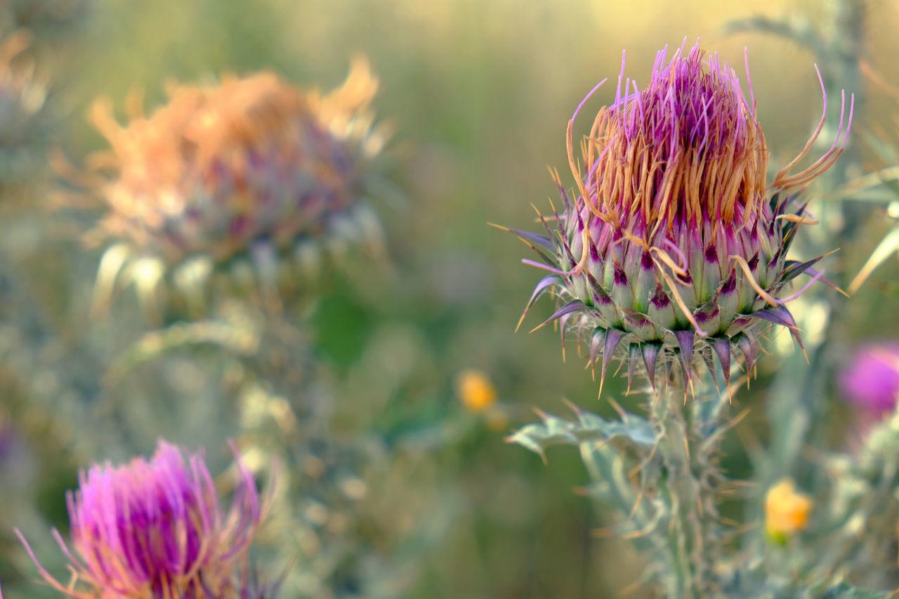 Go Scots! Make Our Garden Grow Flowers