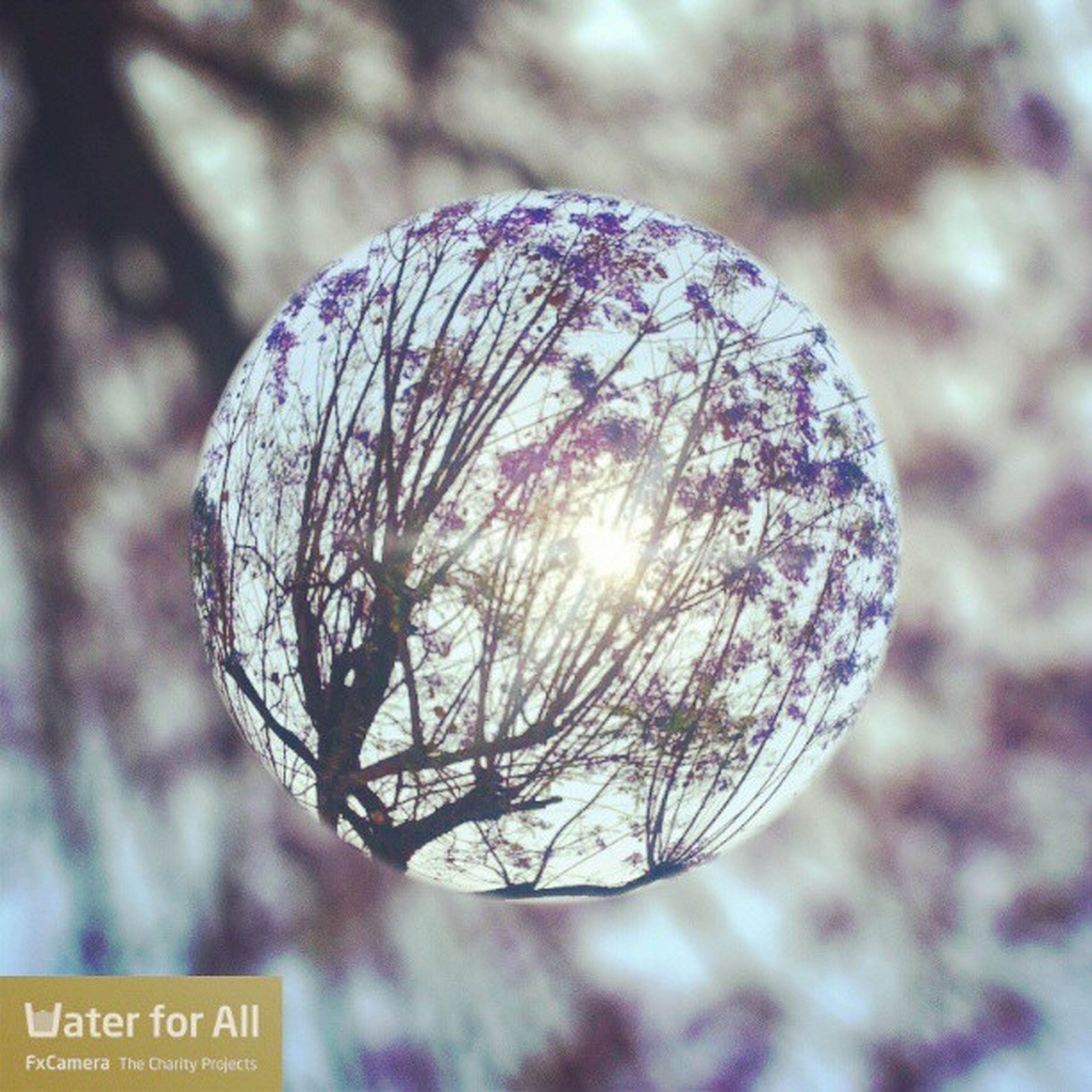 close-up, focus on foreground, circle, tree, sphere, hanging, outdoors, no people, bare tree, nature, branch, day, decoration, winter, celebration, low angle view, communication, pattern, selective focus, tranquility
