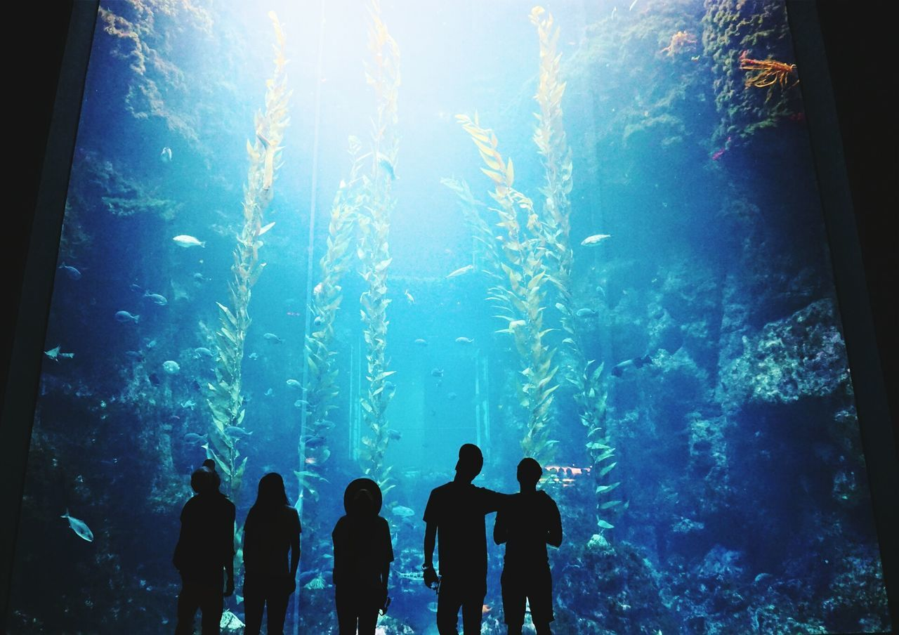 real people, water, leisure activity, fish, silhouette, lifestyles, nature, men, togetherness, swimming, blue, sea life, standing, indoors, underwater, aquarium, beauty in nature, day, scuba diver, undersea