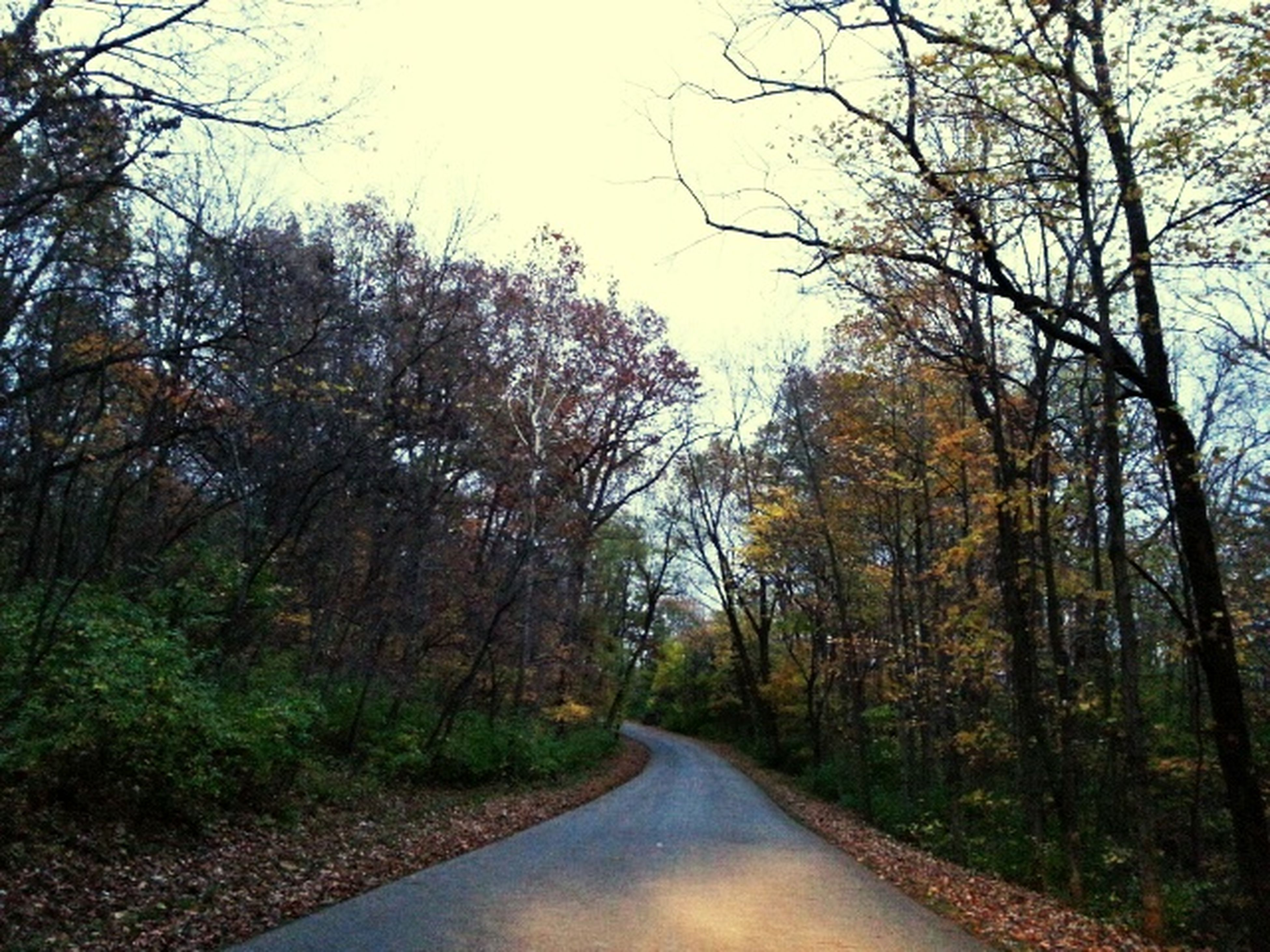 the way forward, tree, diminishing perspective, road, transportation, vanishing point, tranquility, tranquil scene, nature, forest, scenics, beauty in nature, bare tree, long, empty road, sky, country road, day, non-urban scene, clear sky