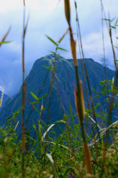 EyeEmNewHere Reunion Island Beauty In Nature Close-up Day Eyemnaturelover Field Grass Growth Mountain Nature Naturelover No People Outdoors Plant Sky Tranquil Scene Tranquility