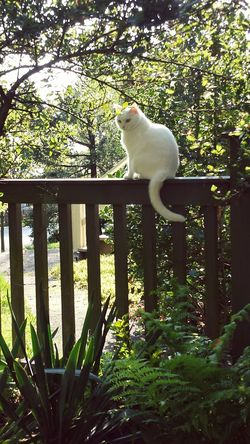 Neighbors cat Bex hanging out.