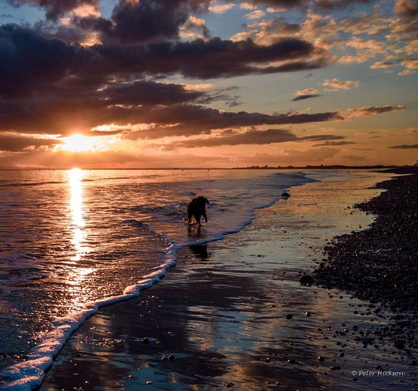 Dog walking into the sunset on the beach at low tide Sea And Sky Dogwalk Cavapoo Dog Sunset Evening Hayling Island  Beach Waves Dramatic Sky Moody Sky Clouds Tranquil Scene