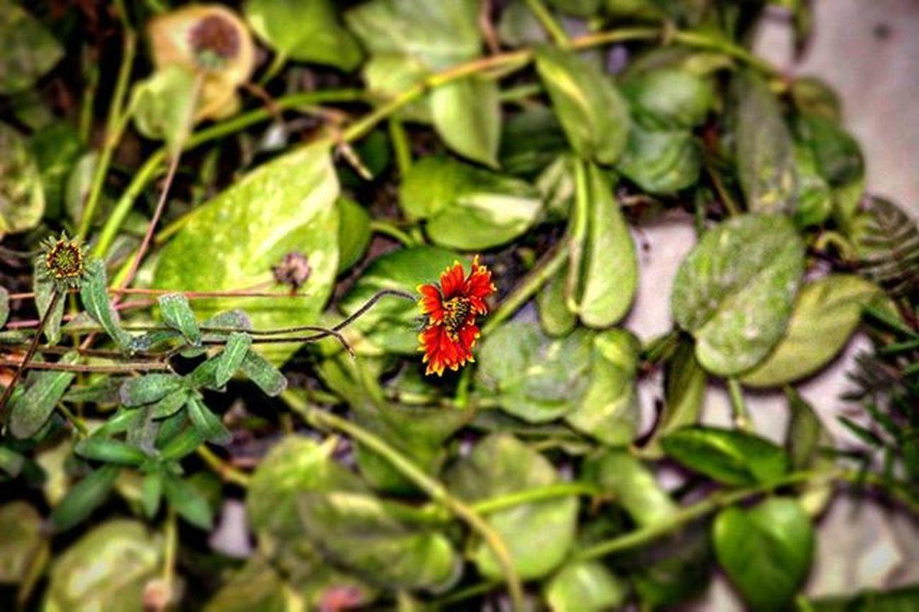 U should grow out MIRACULOUSLY even out of most DIFFICULTIES.. Igersoftheday Igers_wanderlust Flower RedFlower Hppyflwrs Ig_today Igshotz_folk True_photo_lover Photohraphers_of_India Photography Bestshotz BestNatureShotz ExtraordinarySnap Exclusiveshotz Shots Natureshots CanonStrikes 700D Picoftheday Like4like