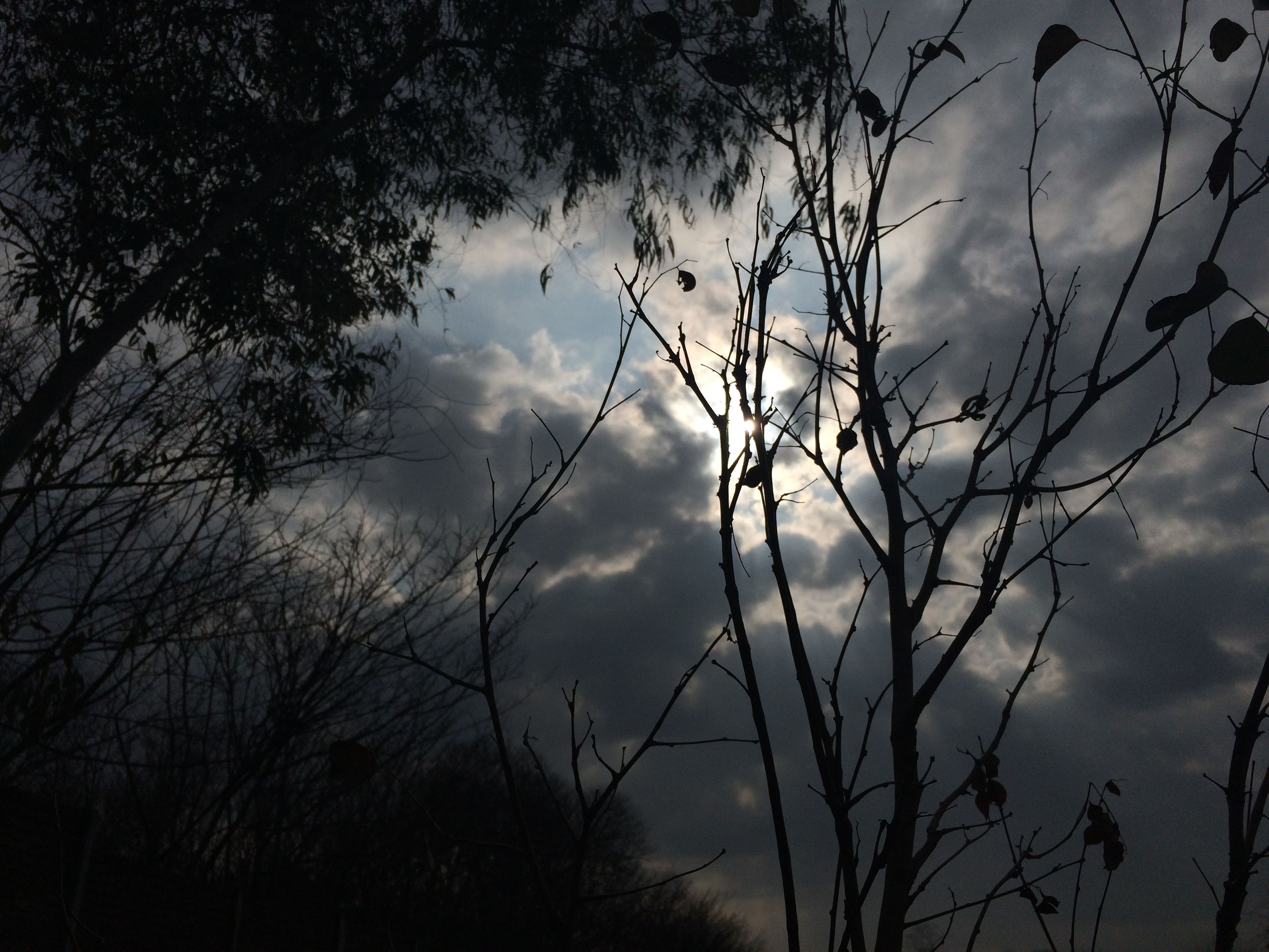 sky, silhouette, cloud - sky, low angle view, tranquility, tree, beauty in nature, nature, cloudy, scenics, tranquil scene, branch, growth, cloud, bare tree, dusk, sunset, outdoors, plant, idyllic