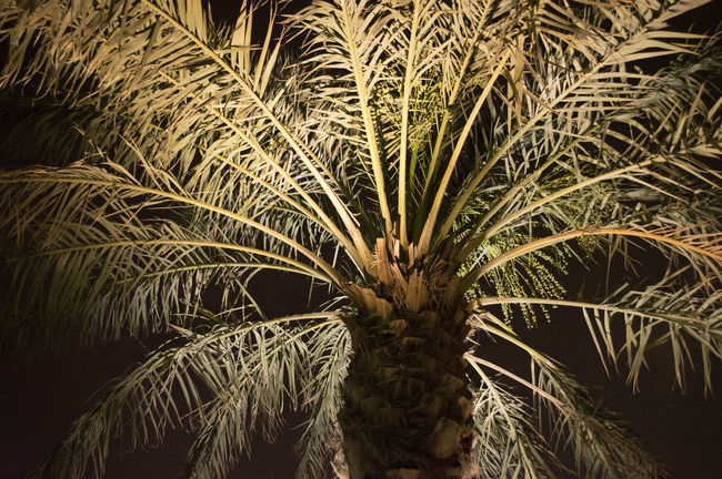 Abstract Backgrounds Beauty In Nature Close-up Dark Detail Full Frame Growth Natural Pattern Nature No People Outdoors Palm Tree Palm Tree Silhouette Tranquility