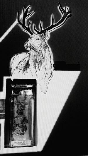 Deer Lights Rat