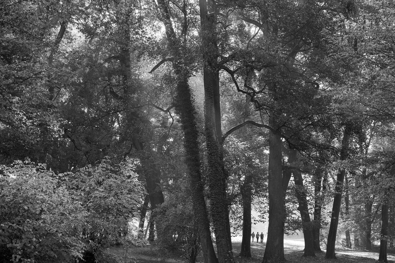 autumn in monochrome part 12 Monochrome Monochrome Photography Lucky's Monochrome Black And White Blackandwhite Photography Mood Lucky's Mood Autumn In Monochrome Autumn Fall Misty Foggy Morning Nature Beauty In Nature Landscape Shootermag EyeEm Gallery People Tranquil Scene Fine Art Photography Backgrounds Low Angle View Light And Shadow Melancholy Melancholic Landscapes
