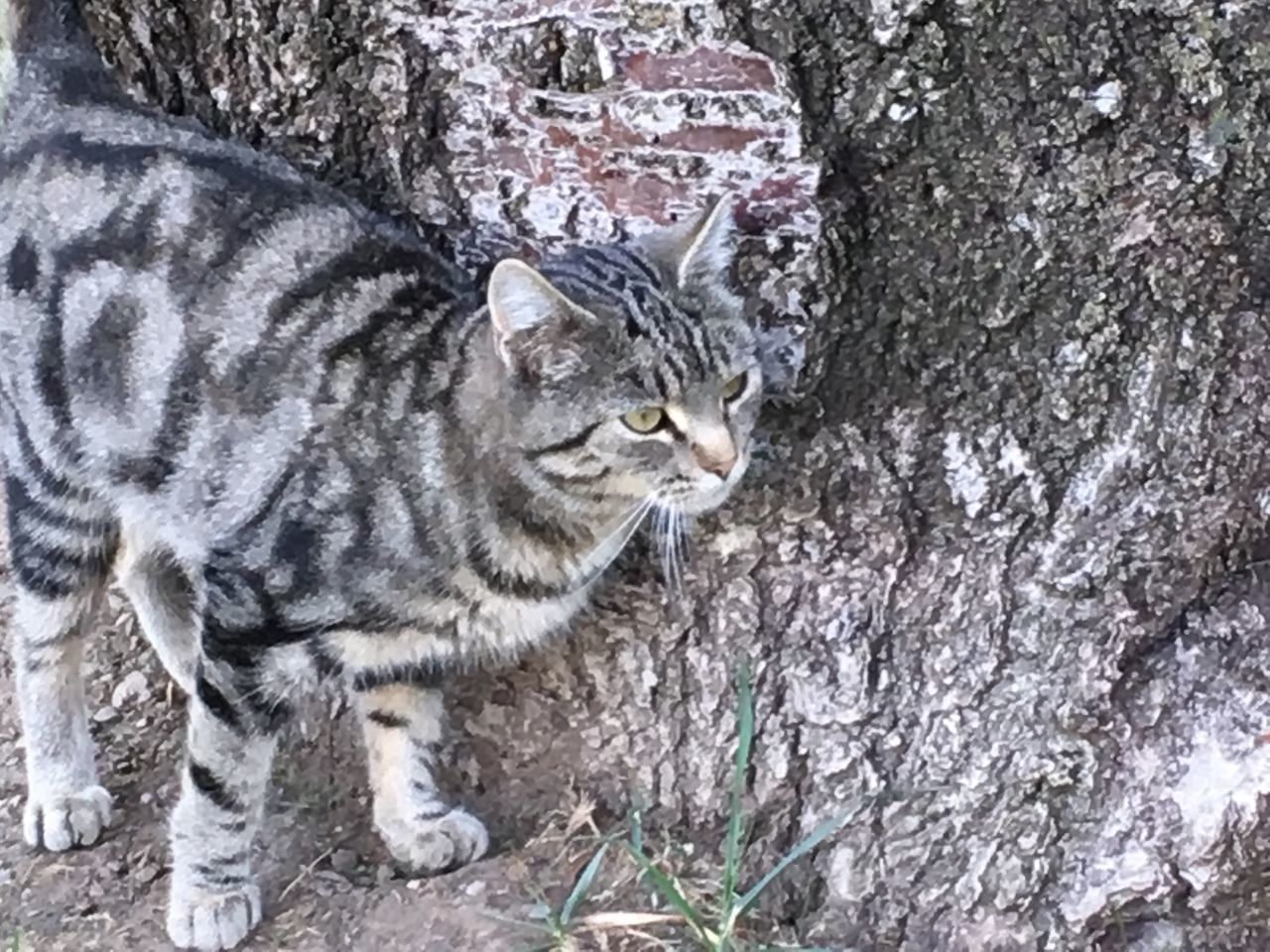 Fur And Bark Textures And Surfaces One Animal Cat Tree Outdoors