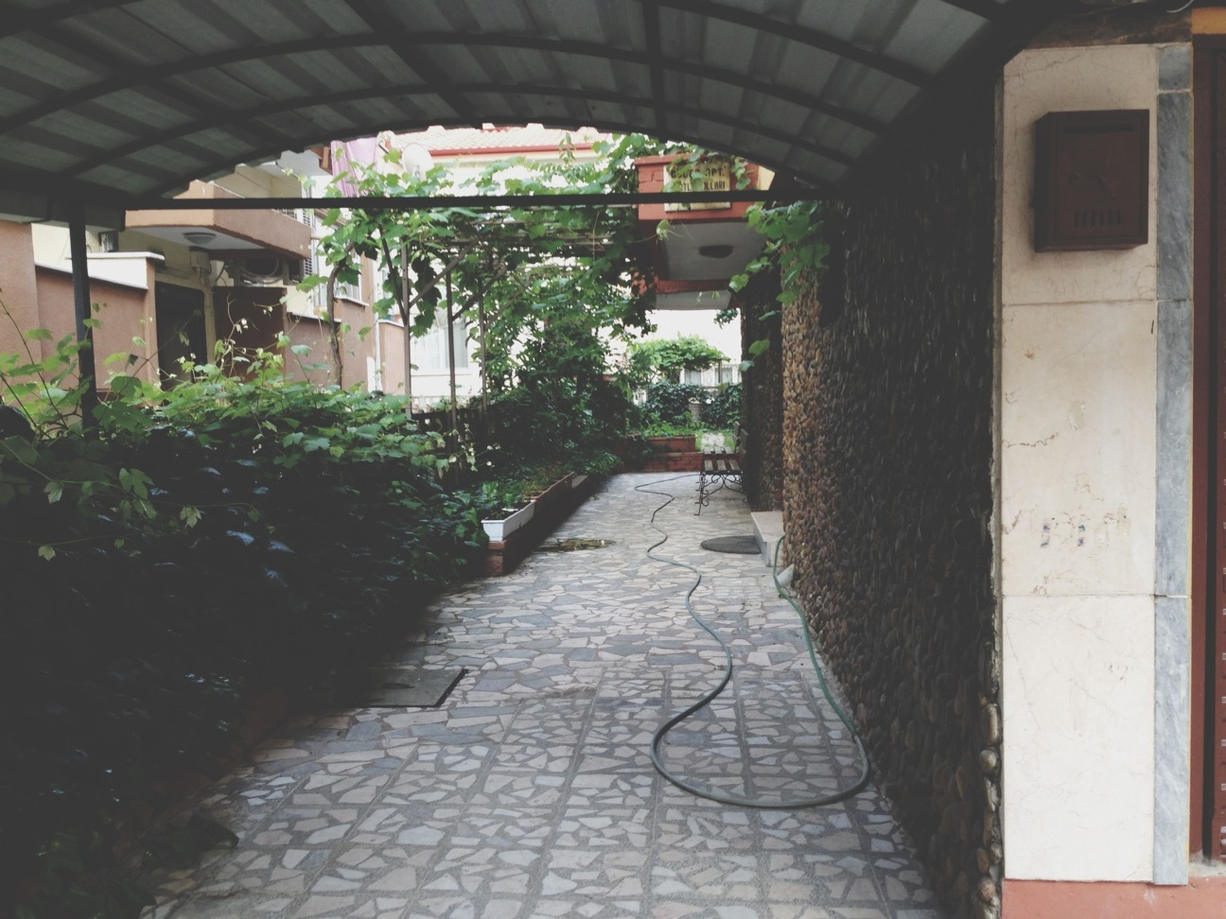 architecture, built structure, the way forward, building exterior, plant, cobblestone, walkway, footpath, narrow, street, pathway, growth, diminishing perspective, paving stone, tree, alley, building, house, residential building, empty