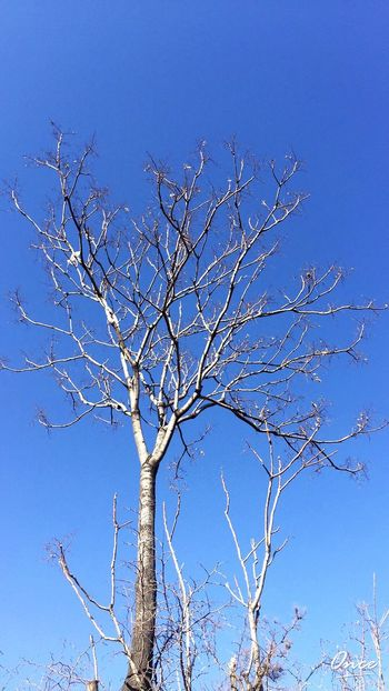 NewYear Blue Sky Tree