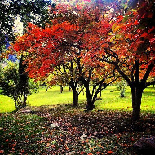 Chitral kpk Pakistan Tree Nature Grass Autumn EyeEmNewHere