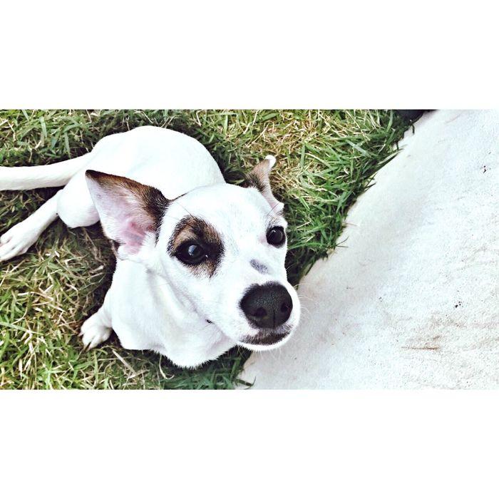Dog Love Jessie
